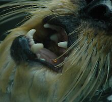 Swimming otter showing its fangs by Jessica  Schoepen