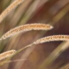 Grasses by Fortune8