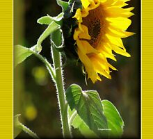 THE SUNFLOWER BIRTHDAY CARD by Magaret Meintjes