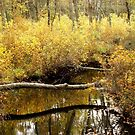 Golden Creek by Sharon Woerner