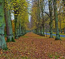 Lime tree avenue, Clumber park Nottinghamshire by naranzaria
