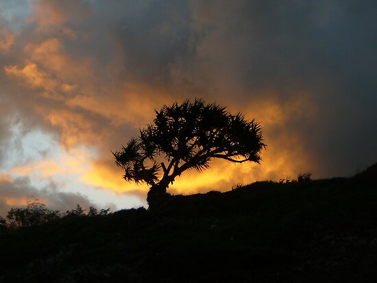 Lone Tree in the Sunset by aussiebushstick