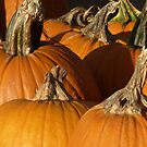 Pumpkins for sale! by ThePhotoMaestro