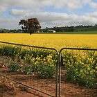 Fields of canola, mid-north South Australia. by elphonline