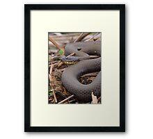 Northern Water Snake Framed Print