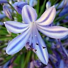 Flowers of Western Australia by AussieChris