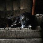 Dog Tired by Lolabud