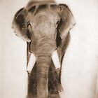 Tusker by jasminedew11