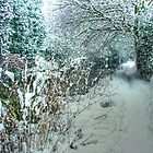 Winter on the Canal - HDR by Colin J Williams Photography