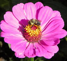 Bee and Pink Flowe Tyler Rose Garden Center by eviejune1e
