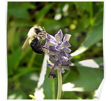 Bee and Purple Flower Tyler Rose Garden Center Poster