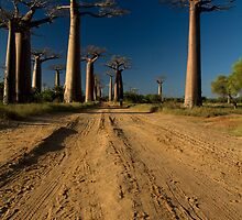 Baobabs Alley I by Martin76