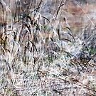 Small- Reeds by natans