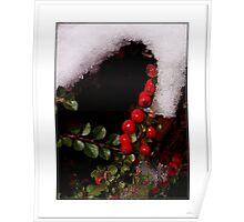 *Winter Berries* Poster