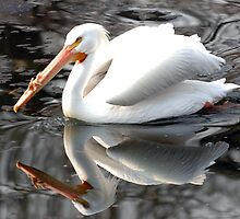 Pelican reflected in lake in St James Park by Russell Bruce