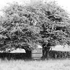 Twin trees  by Julian Easten