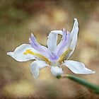 Desert Lilly by zzsuzsa
