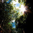 Sunlight through Trees by designandframe