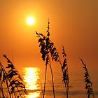Sea oat silhouette - Carolina Beach by jabo7