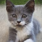 Portrait of Kitty by jabo7