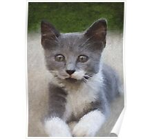 Portrait of Kitty Poster