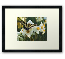 Swallowtail and daffodils Framed Print