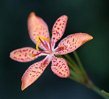 leopard lily by Iris Mackenzie
