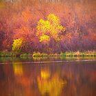 Paintbrush Trees by Linda Miller Gesualdo
