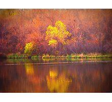 Paintbrush Trees Photographic Print