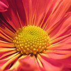 Flower of Life by nobettertime
