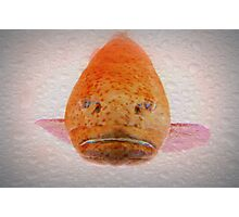 One Big Ugly Fish part 2 Photographic Print