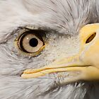 American Eagle - detail of eye by Jarede Schmetterer