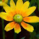 Yellow Petals!!! © by Dawn M. Becker
