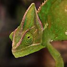 Chameleon by Robert Sturman