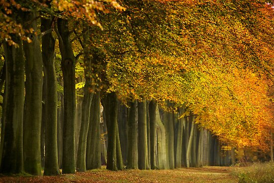 Rolling Leaves by LarsvandeGoor