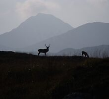 One Stag and his hind, Isle of Rum by Keri Russell