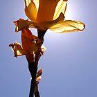 Floriade by Phillip Cullinan