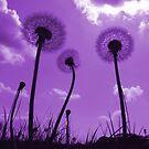 Dandelions in Purple by Samantha Higgs