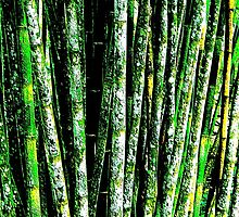Bamboo Grove-Structured by gallerywaja