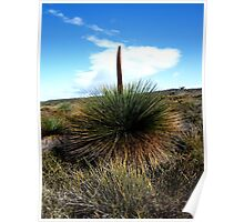 Native plant in bush Poster