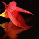 Autumn red by Lyn Evans