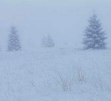 Foggy winter afternoon in the moor - High Venn / Hautes Fagnes, Belgium by intensivelight
