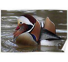 The Mandarin Duck Poster