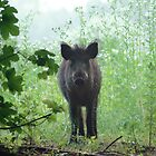 Young wildboar by intensivelight