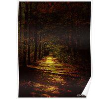 Illuminated Path Poster