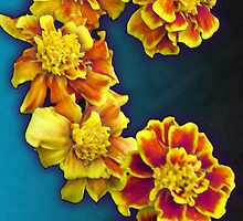Marigolds by Shannon Underwood