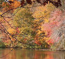 Autumn in Rhode Island by Allyson Barth