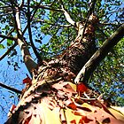 Arbutus in Nanaimo by clester