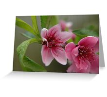 Sweet Blossom Greeting Card