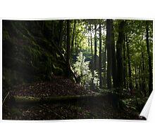 spot of white light on tree Poster